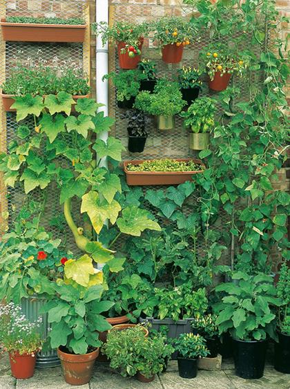 Top 10 kiểu vườn rau khác lạ