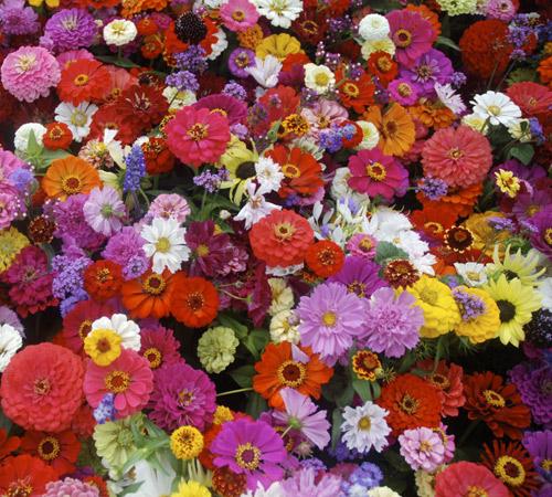 Loài hoa may mắn cho 12 cung hoàng đạo