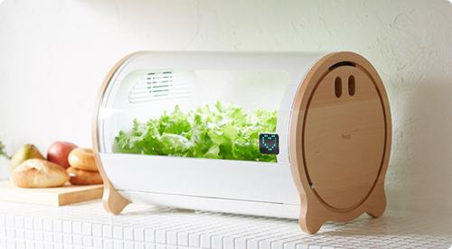 Trồng rau không cần đất, không cần nắng kiểu Nhật
