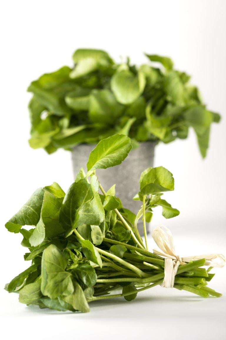 Trồng 'siêu thực phẩm' rau mầm cải xoong ngừa ung thư