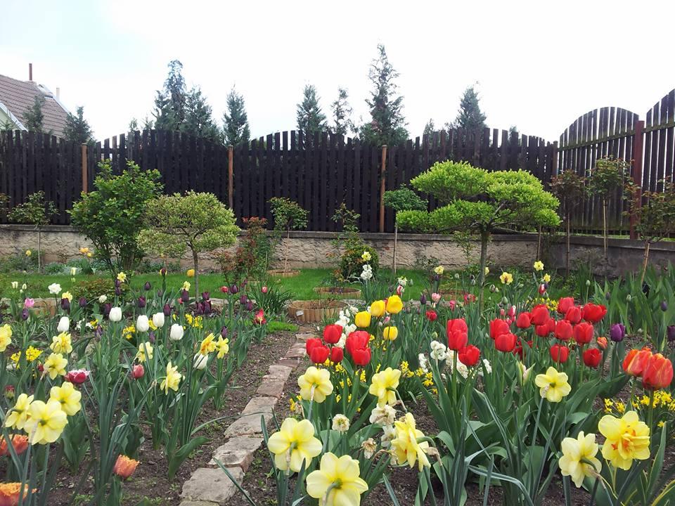 """Khu vườn 250m² của mẹ Việt """"6 năm nhặt sỏi trồng hoa"""""""