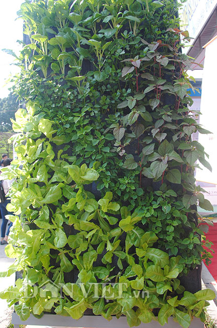 Mê mẩn vườn treo rau sạch thông minh dành cho nhà chật