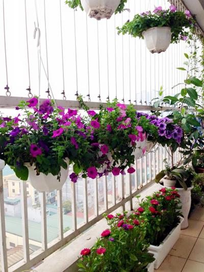 Ngắm căn chung cư Hà Nội lãng mạn như thơ nhờ ban công hoa