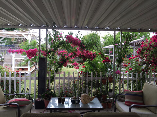 Ngắm khu vườn 800m2 đầy hoa trái của người vợ Việt ở Mỹ