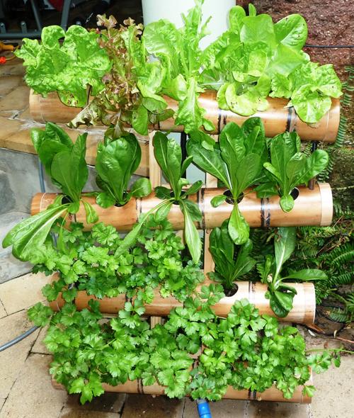 Những vườn rau 'bát ngát' xanh trồng trong ống tre