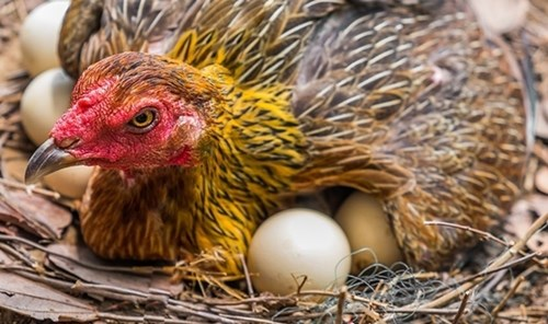 5 giây biết ngay trứng hỏng hay trứng tươi mới ?