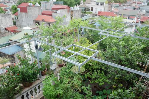 Ngắm vườn rau quả phủ kín hai tầng tuyệt đẹp ở Hà Thành