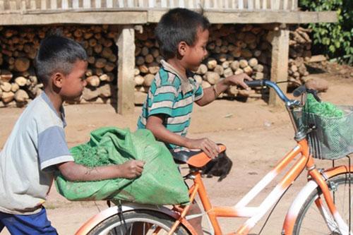 Tỷ lệ trẻ em Việt bị thấp còi chiếm 24,6%