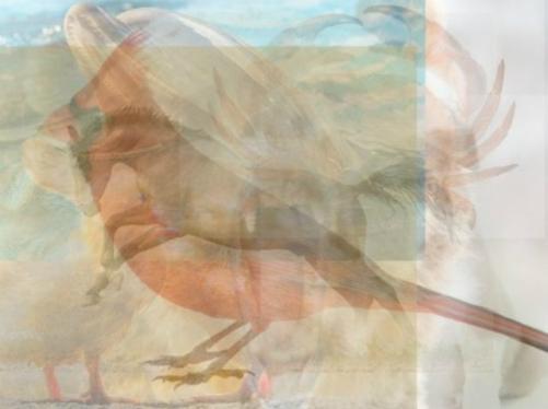 7 con vật trong bức ảnh ảo giúp bạn kiểm tra trí não