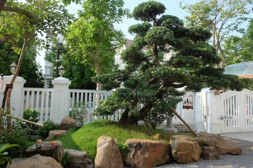 Ngắm không gian vườn Nhật 120m2 trong biệt thự Hà Nội