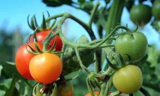 Những loại rau củ chỉ hợp ăn sống hoặc ăn chín ?