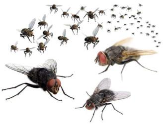 10 cách đơn giản để nhà bạn 'không còn bóng ruồi'
