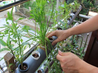 An toàn, năng suất cao khi trồng rau thuỷ canh