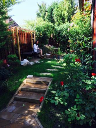 Cây hồng oằn mình vì hoa của chủ nhà Việt ở Hungary