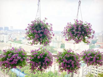 Ngắm ban công tầng 18 ngập hoa rực rỡ ở Hà Nội